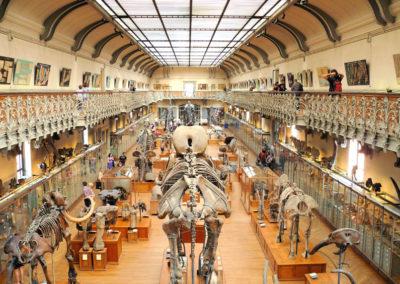 Muséum d'Histoire naturelle  – Galeries de Paléontologie et d'Anatomie Comparée