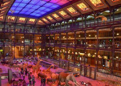 Muséum d'Histoire naturelle – Grande Galerie de l'Évolution